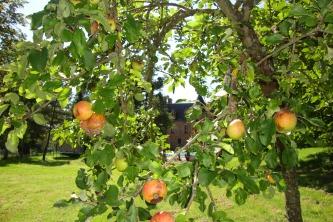Fruit uit eigen tuin