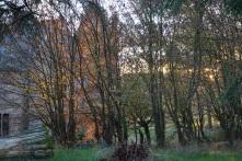 Avondrood op het kasteel, door de bomen gezien