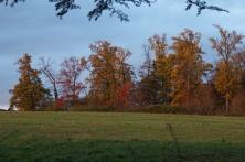 Avondrood op het bos bij de weide van het kasteel